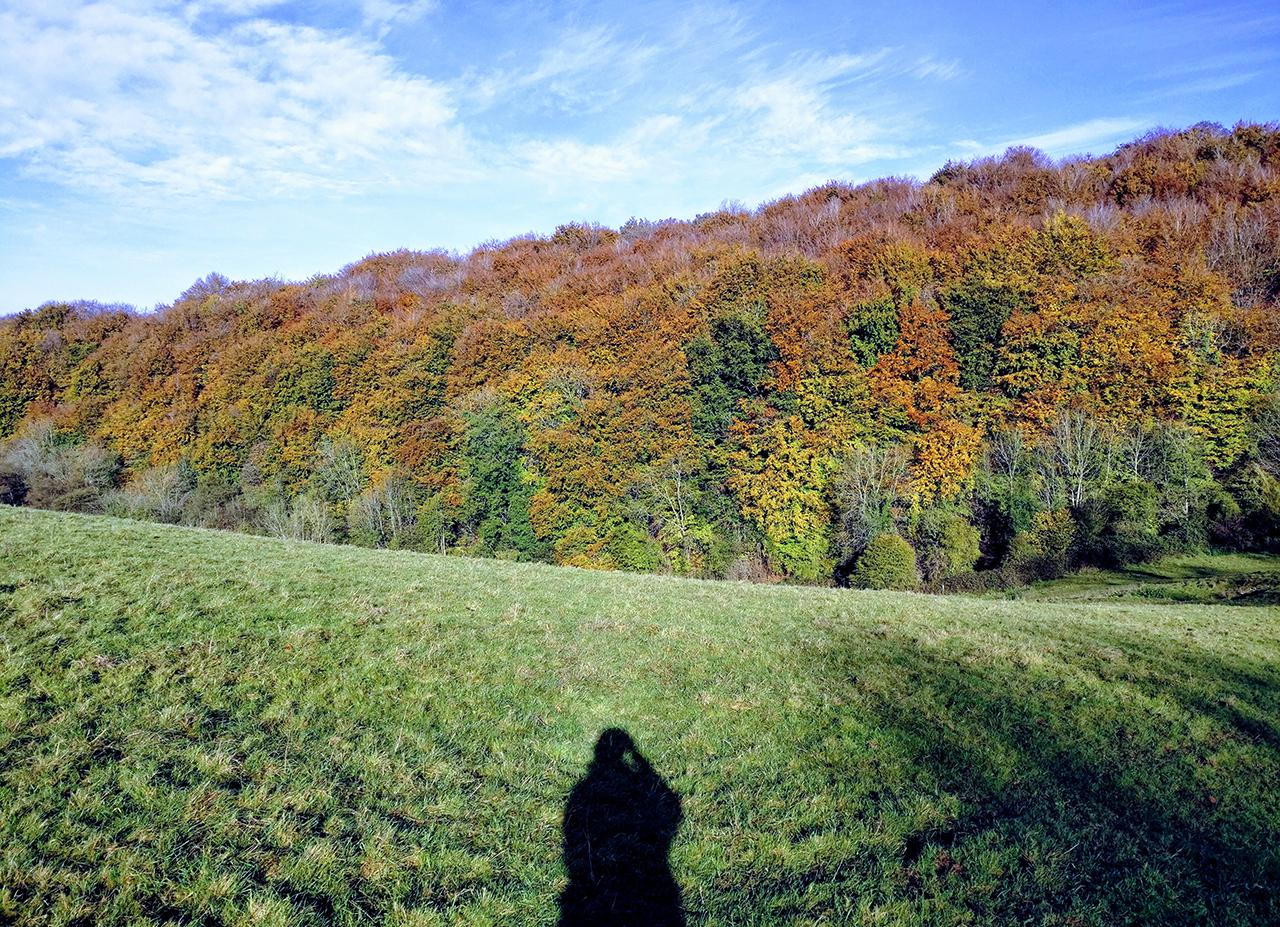 Cranham Woods in autumn