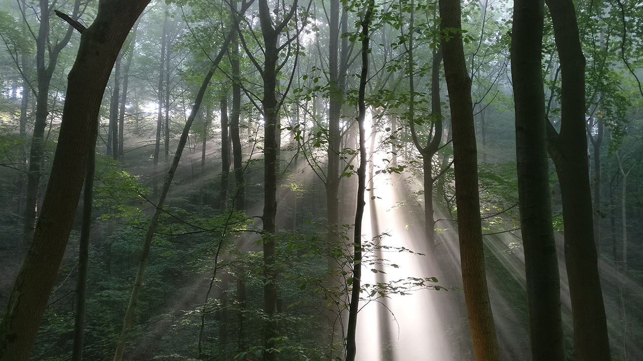 SunbeamTrees